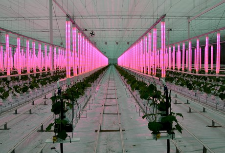 Lohuis Lighting & Energy horticulture